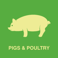 Pigs and Poultry